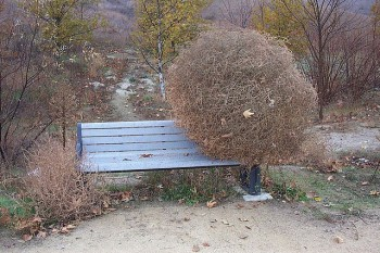 this is what tumbleweed looks like