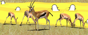 Snapchat Gazelle Watering Hole