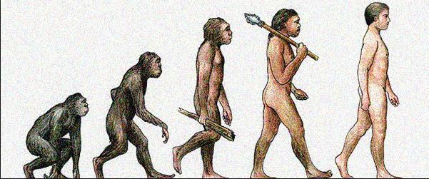 word evolution